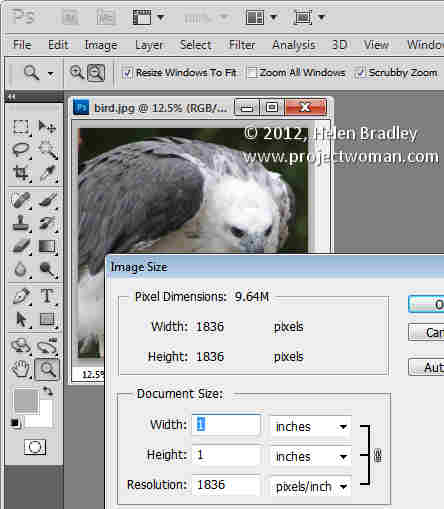 Photoshop crop image to fixed ratio 4 Crop to fixed ratio in Photoshop