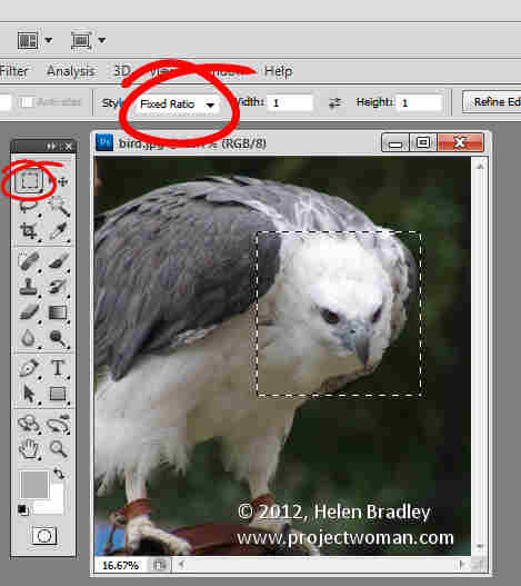 Photoshop crop image to fixed ratio 7 Crop to fixed ratio in Photoshop