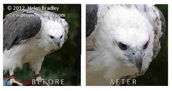 Photoshop crop image to fixed ratio before after e1331137464718 Crop to fixed ratio in Photoshop