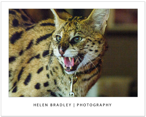 Take photos at the zoo cat Talk to the Animals – Photograph at the Zoo – Part 2