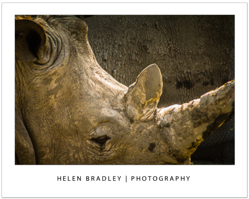 Take photos at the zoo rhino Talk to the Animals – Photograph at the Zoo – Part 2