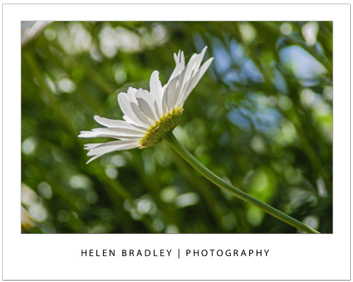 spring photo tips for shooting flowers 1 Spring photo inspiration and how to capture great flower photos