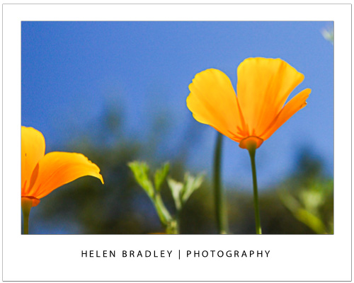 spring photo tips for shooting flowers 2 Spring photo inspiration and how to capture great flower photos