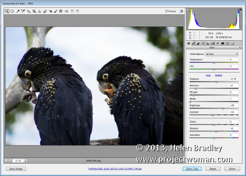 jpeg or raw acr JPEG vs RAW   whats the difference and what should you use?